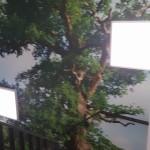 Fotobehang trap